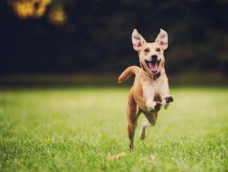 В ветеринарных клиниках началась новая акция по чипированию домашних животных